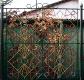 budapest fences 01