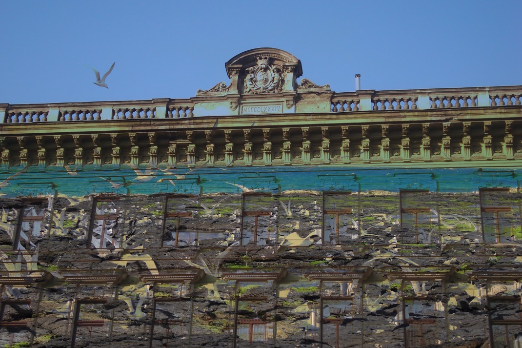 birds buildings