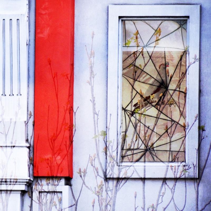 birds windows
