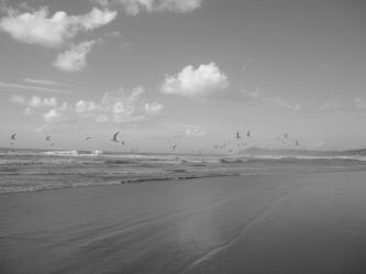 Sue Rado Photography Byron Bay Fernleigh