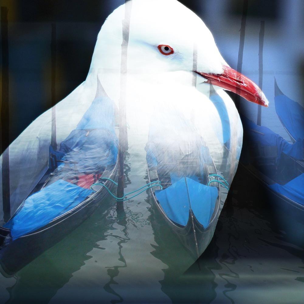 Venice Seagull